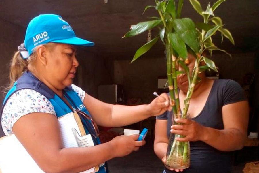 Control de plagas Muniventanilla recibiendo una planta.png