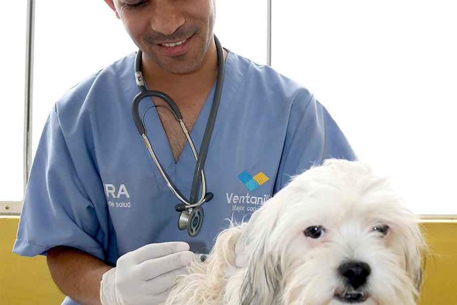 Somos Patas Muniventanilla Veterinario atendiendo una mascota